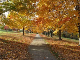 The Arboretum 86